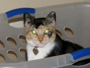 Carmen in the Laundry Basket