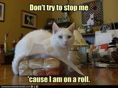 Cat on a roll