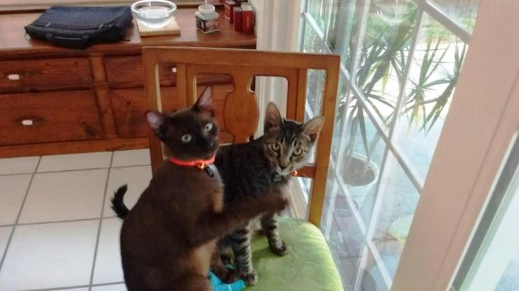Kittens in Collars
