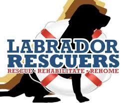 Lab Rescuers